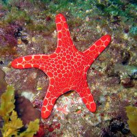 Sea Star at Busselton jetty - Sue Barstow