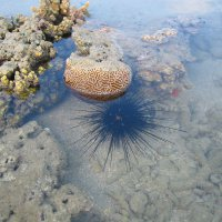 Sea urchin - Parks and Wildlife