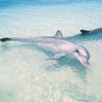 Dolphins - Photo copyright Eva Boogaard/Parks and Wildlife