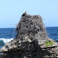 Sea Eagle nest - Gilbert Stokman