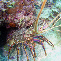 Crayfish - Photo copyright Cathy Zwick