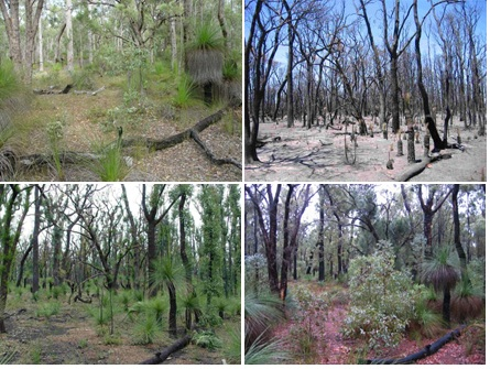 four images of the same forest area showing recovery after fire