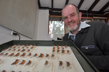 Researcher Andy Williams with butterfly specimens