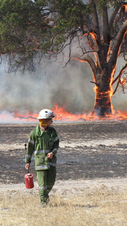 Hand prescribed burning with drip torches