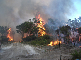 Northcliffe bushfire of 2012