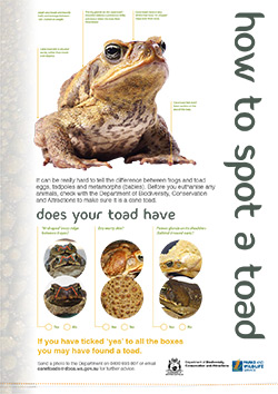 How to spot a toad poster thumbnail