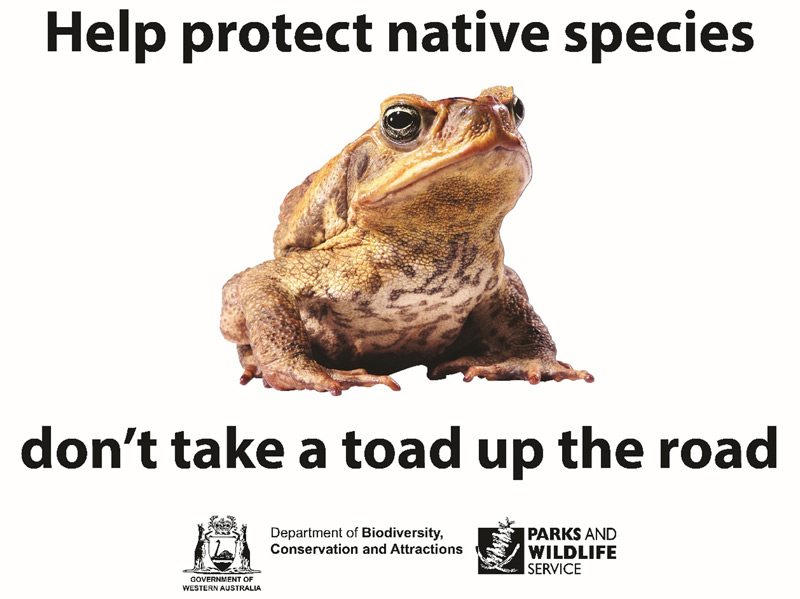 Graphic promotion - help protect native species, don't take a toad up the road