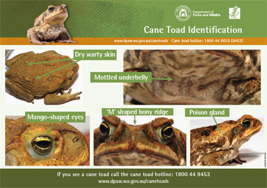 canetoad identification