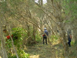 Removing weeds from Canning River Regional Park