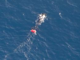 Entangled whale off Geraldton coast
