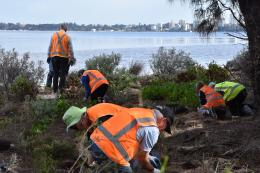 Swan Canning Riverpark to benefit from funded volunteer projects