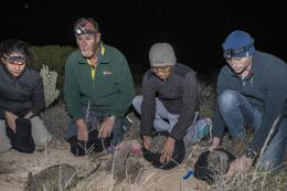 DBCA staff and volunteers release hare-wallabies onto the island. Photo- DBCA