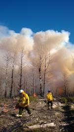 Prescribed burning in pine plantations north of Perth