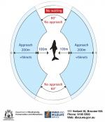Safety distances required when within 300m of a whale